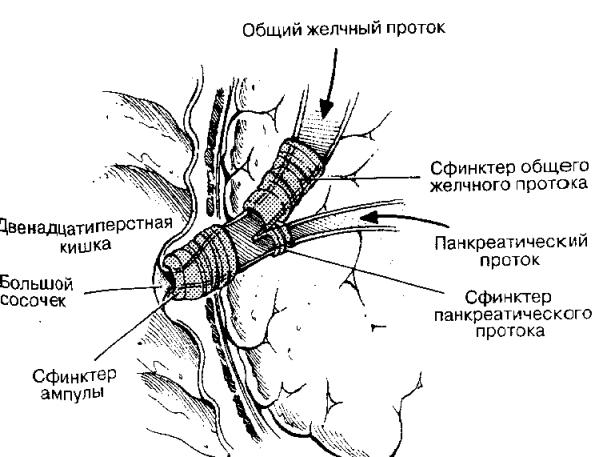 Желтуха механическая